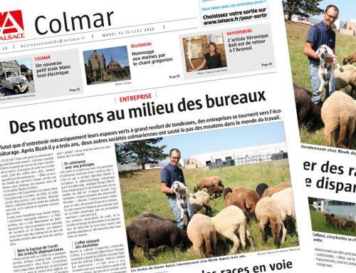 Publication dans le journal l'Alsace