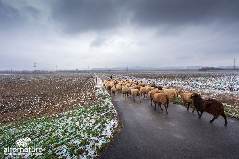 Transhumance Alternature