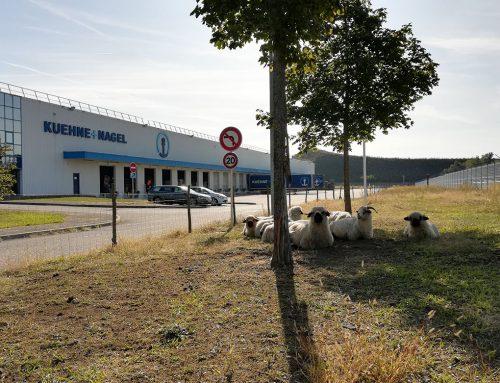 KUEHNE+NAGEL – Cernay